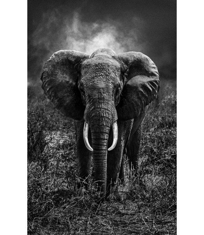Serge Anton - Elephant