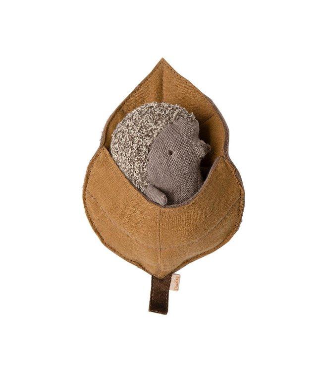 Baby hedgehog in leaf