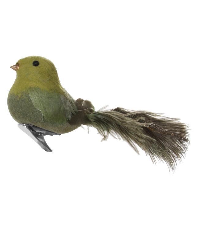 Vogel met clip - struisvogel staart groen