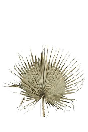 Palm leaf XL