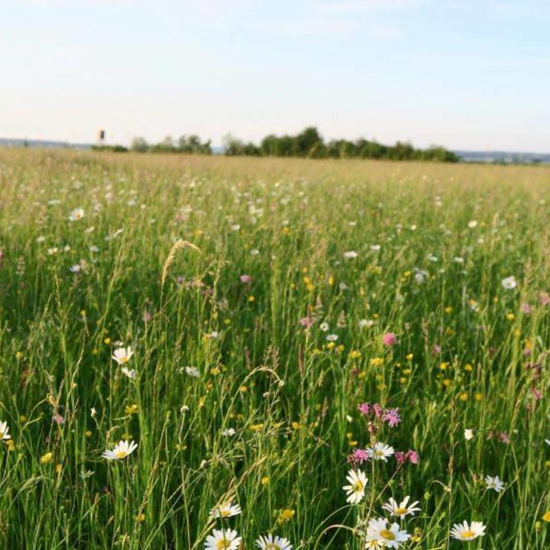 Semhof Bio Heucobs (Organic Haypellets)