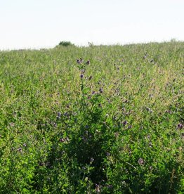 Semhof Bio Luzernepellets (Organic alfalfa Pellets) Medium