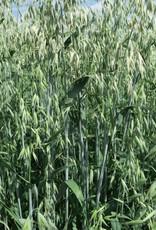 Semhof Bio Grünhafer (Organic Green Oats Pellets)