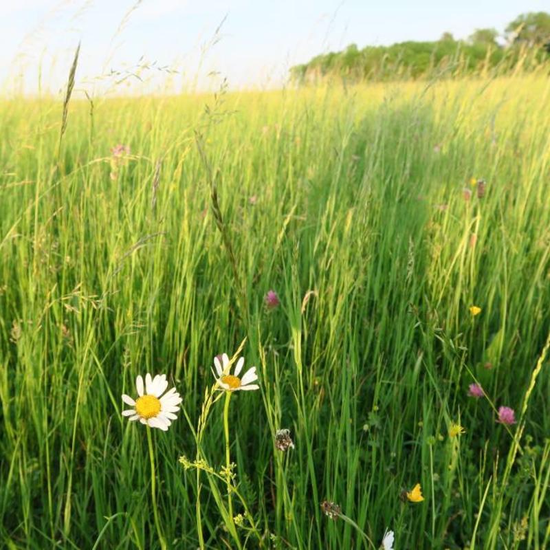 Semhof Bio Wiesencobs (Organic Meadow Pellets)