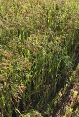 Semhof Bio Grünhafer (Organic Green Millet Pellets)