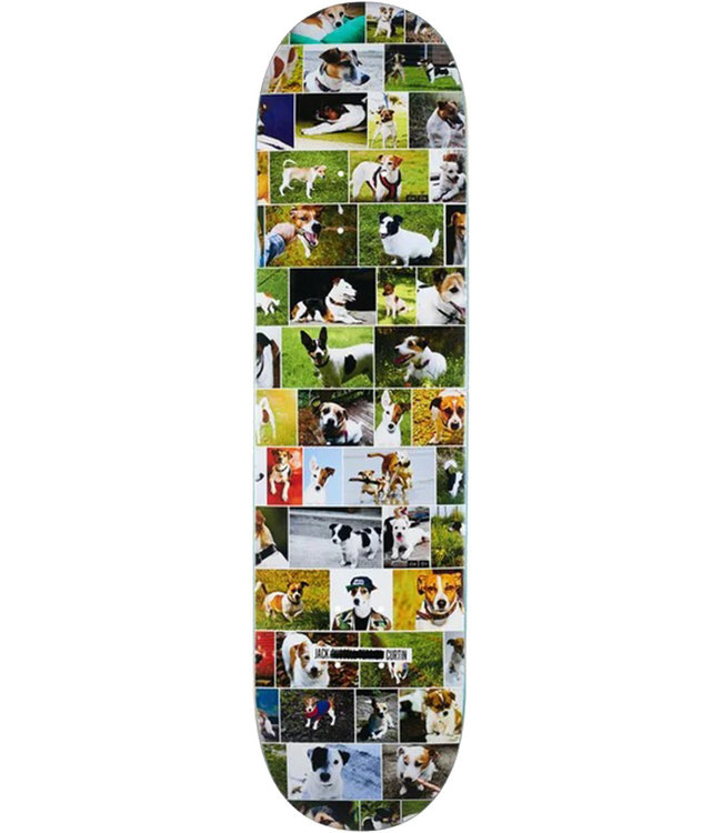 SKATE MENTAL Curtin Dogs Deck Assorted - 8.0