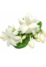 Paraffine Jasmine