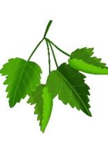 Nagelolie Tea Tree