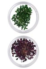Nailart Box Droogbloemen Grote Bloem