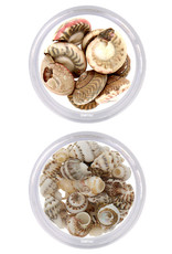 Nailart Set Shells