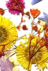 Dried Flowers Mix 3D Sunflower