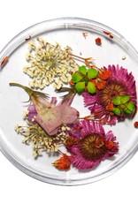 Droogbloemen Mix 3D Sweet Meadow