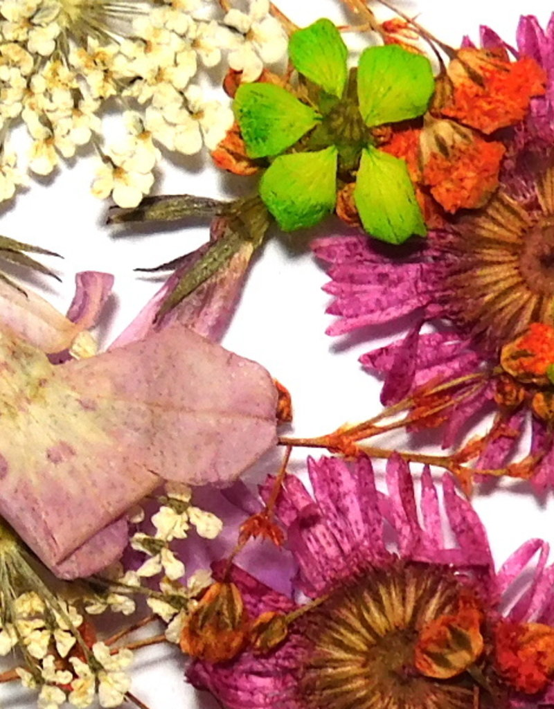 Dried Flowers Mix 3D Sweet Meadow