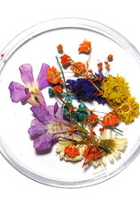 Droogbloemen Mix 3D Bouquet of Color