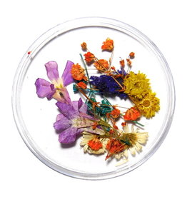 Dried Flowers Mix 3D Bouquet of Color
