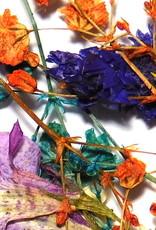 Dried Flowers Mix 3D Bouquet of Color