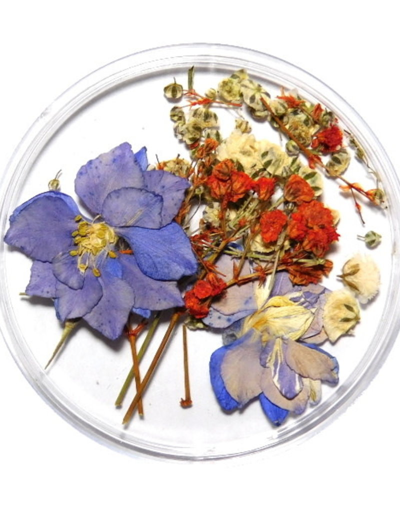 Dried Flowers Mix 3D Sprinkle of White