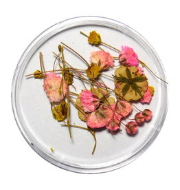 Dried Flowers Mix 3D Tiny Florals