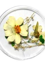 Dried Flowers Mix 3D Heaven's Garden