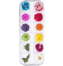 Dried Flowers Set Rainbow