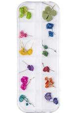 Droogbloemen Set Cute Flowers