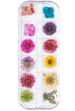 Droogbloemen Set Flower Fun