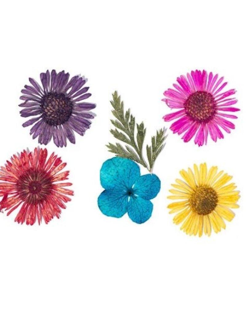 Dried Flowers Set Flower Fun