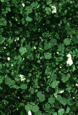 Glitter Set In The Meadow