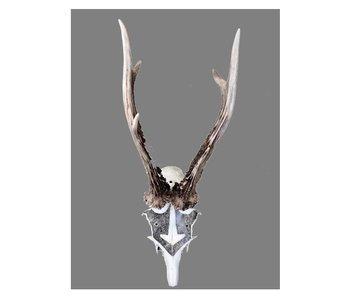 Solawende : Handbetekende schedel Mjolnir
