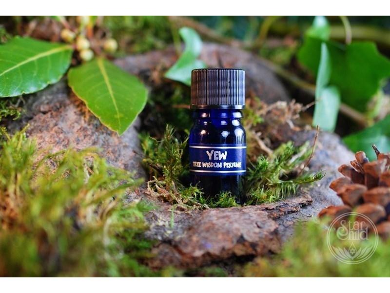 Star Child Parfum Taxusboom (Star Child)
