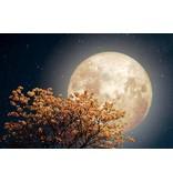 Online Viering : Volle Maan Maanviering  met de Godin Hestia 29 januari