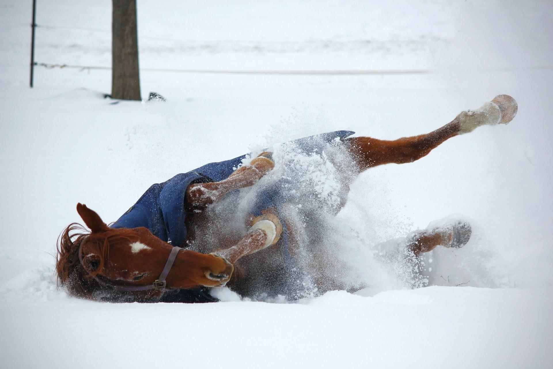 Paardendeken waterdicht maken