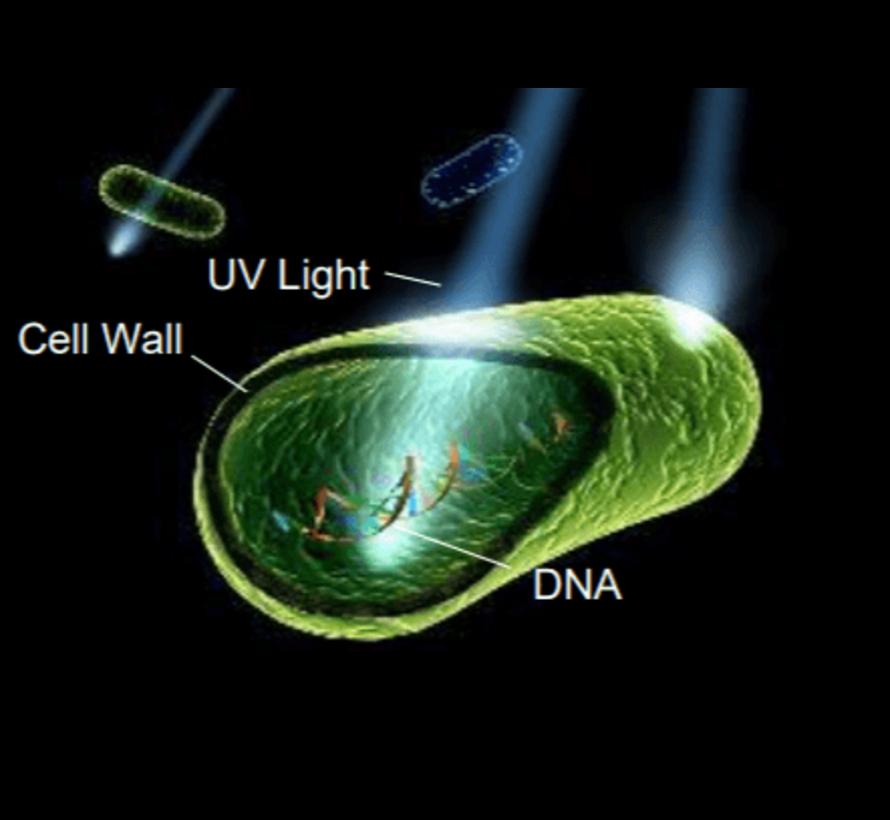 Sterilisatiekast UVC - doodt virussen en bacteriën