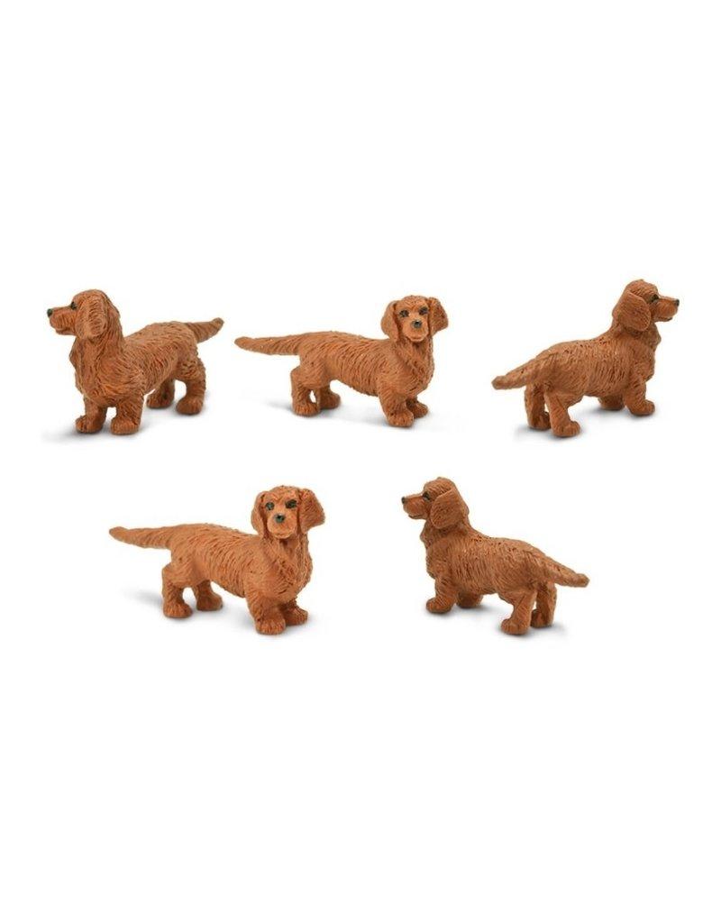Goodluck mini - dachshund