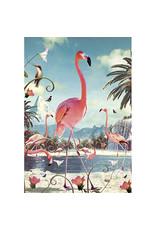 Ansichtkaart - Flamingo's