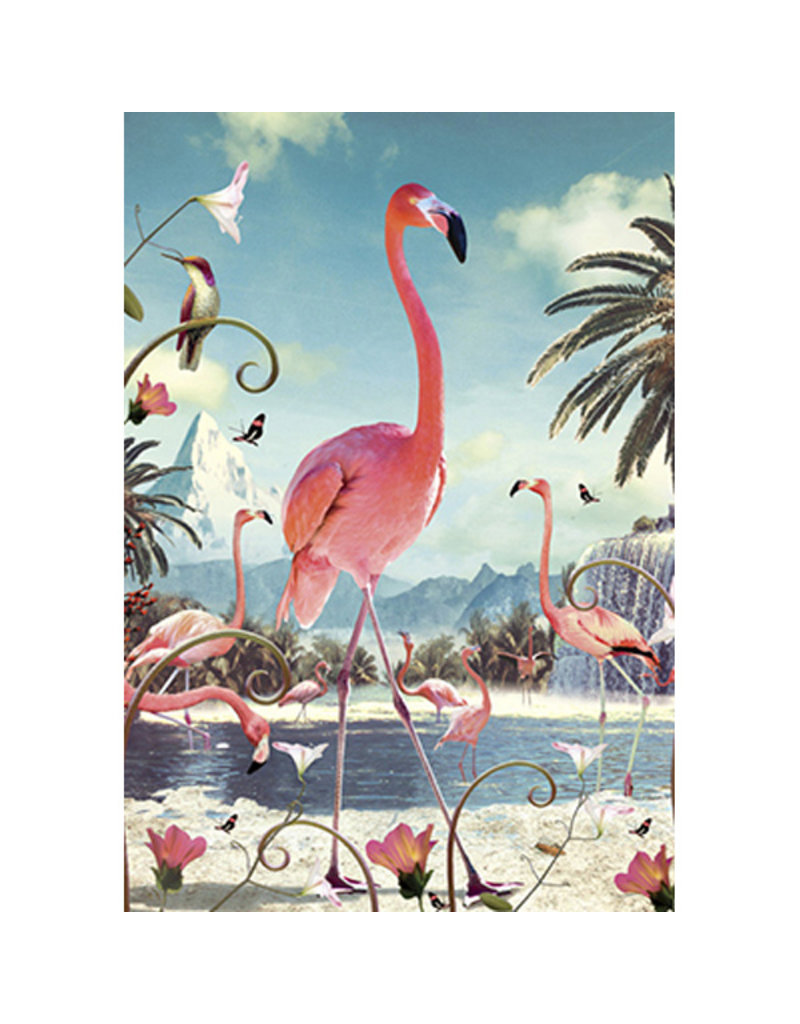 Postcard - Flamingos