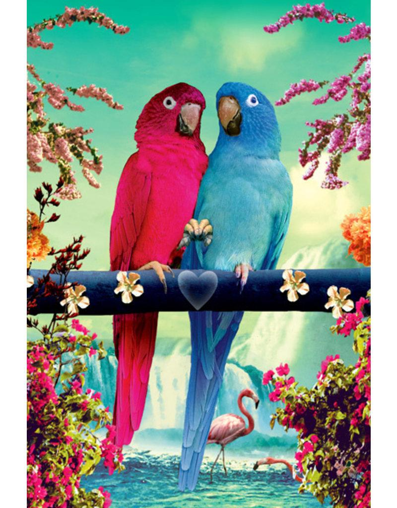 Ansichtkaart - Parrots