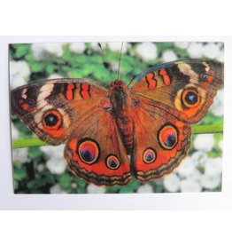 3D kaart - Vlinder