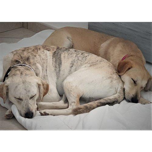 Dog is Awesome® Lady-Fit Tank Top: Un perro puede cambiar tu forma de ver el mundo
