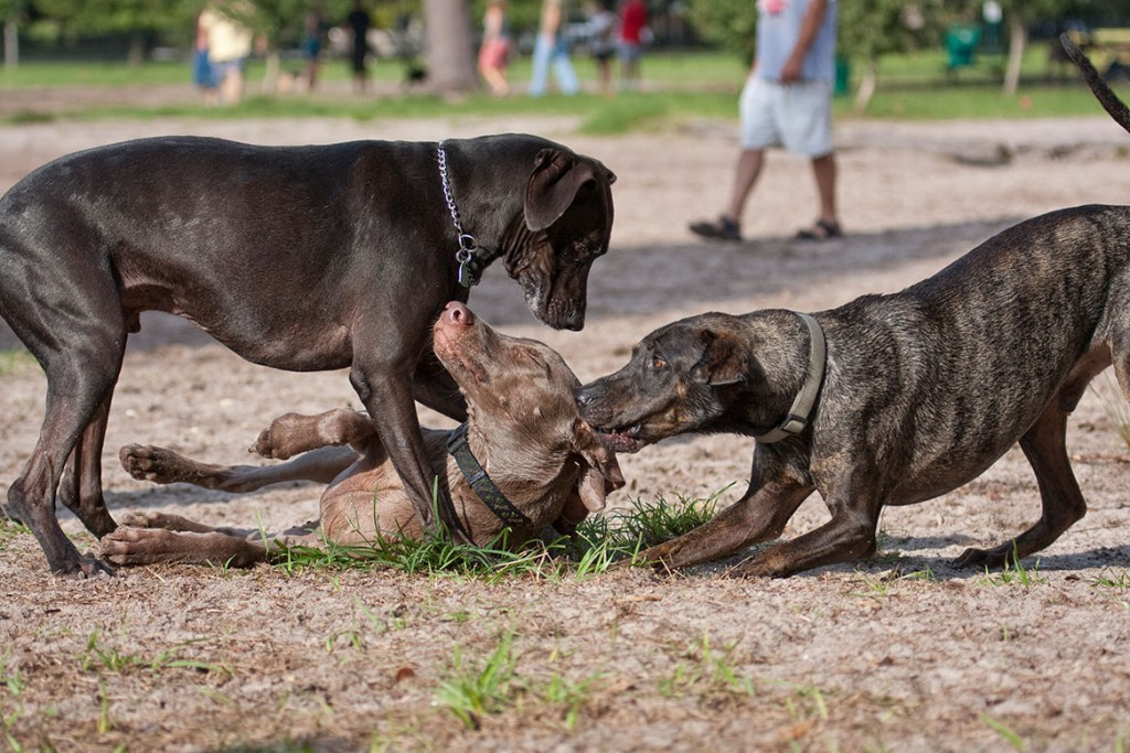 Hundepark