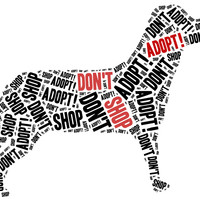Purchase or adopt a dog?