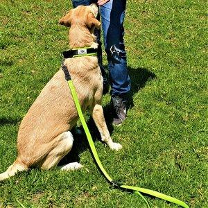 Dog is Awesome® Set Hundeleine und Halsband