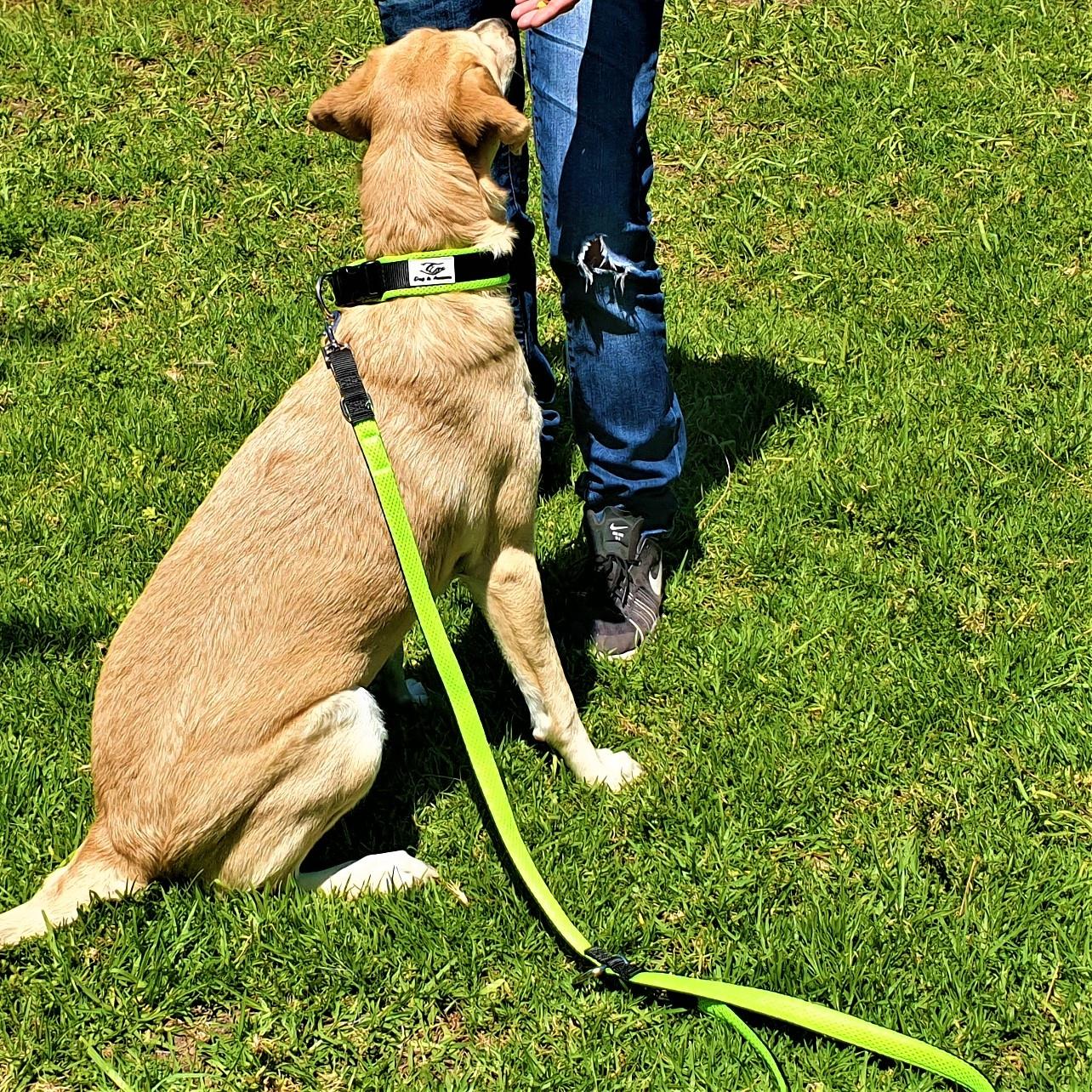 Hundehalsband Dog leash Halsband Leine f/ür starke Hunde griffige Leinen 1,20 m l/änge Hundeleinen mehrfarbig Hundeleine Pitbull Hundeleine geflochten Hundeleine American Bully Hundeleine im Set mit Halsband