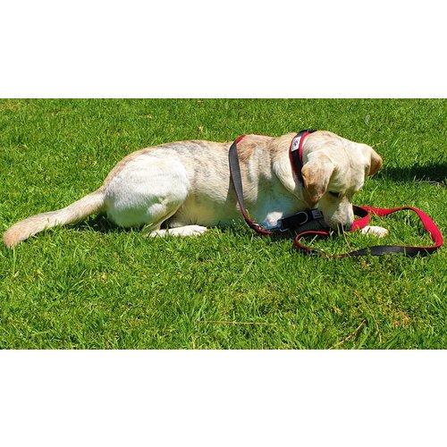Dog is Awesome® Set Hundeleine & Halsband Mesh DIA®