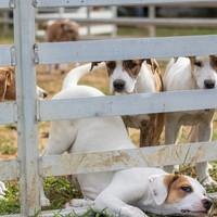 So verhindern Sie, dass Ihr Hund aus dem Gelände zu Hause ausbüchsen kann