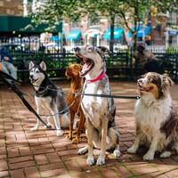 5 Gründe warum du mit deinem Hund spazieren gehen solltest