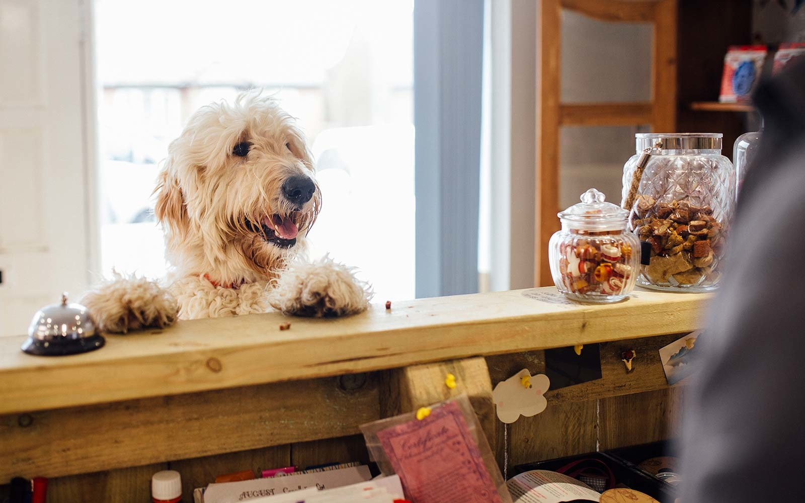 Hund Snackbar
