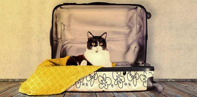 Cat_suitcase