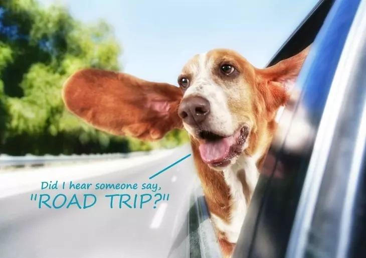 Hund Roadtrip