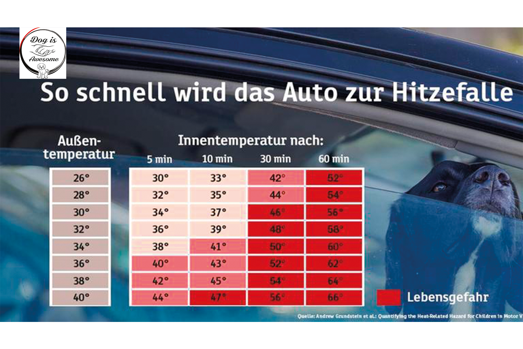 hund temperatur im Auto